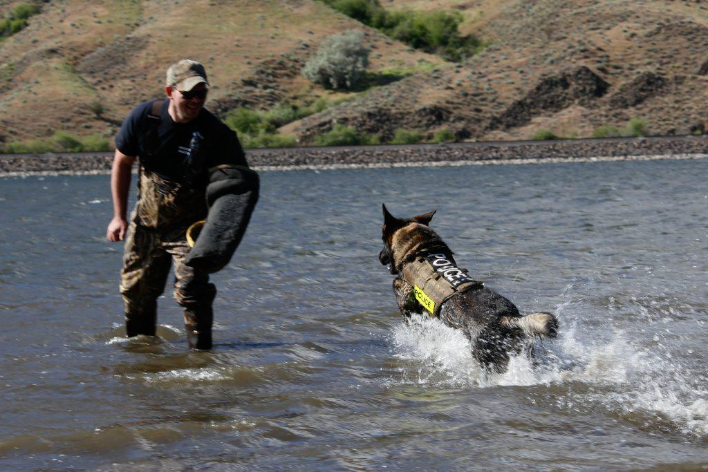 Police K9 training in water